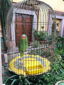 The parrot in the cage