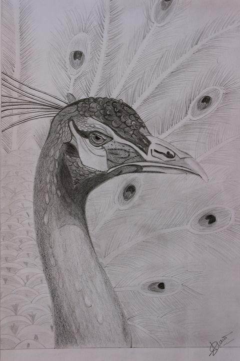 Peacock - Purvi's Pencil Sketchs