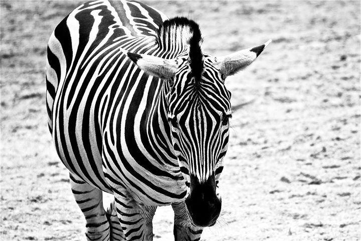 Striped - Photography by MarieAlyse