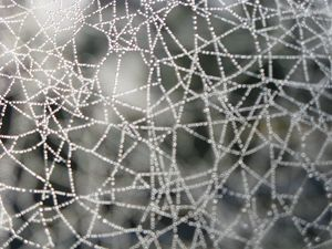 web of intrigue