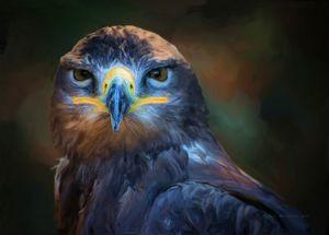 Birds - Hawk - Lord of sky - Sipo Liimatainen