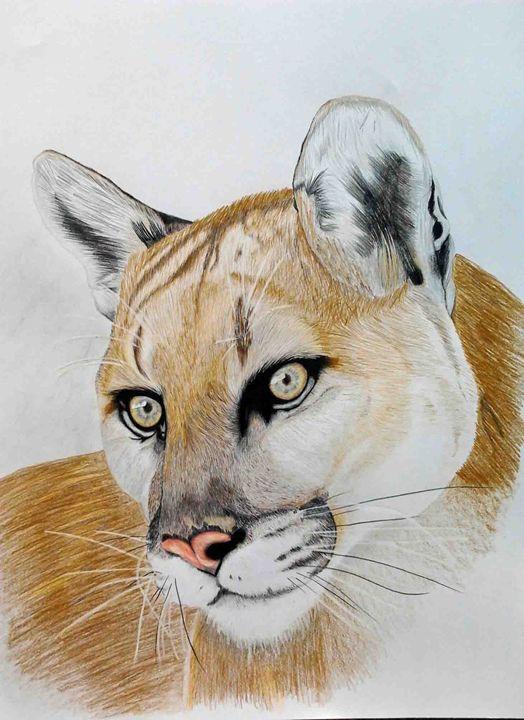Mountain Lion - Paul Murray