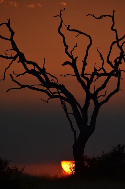 African sky - Paul Murray