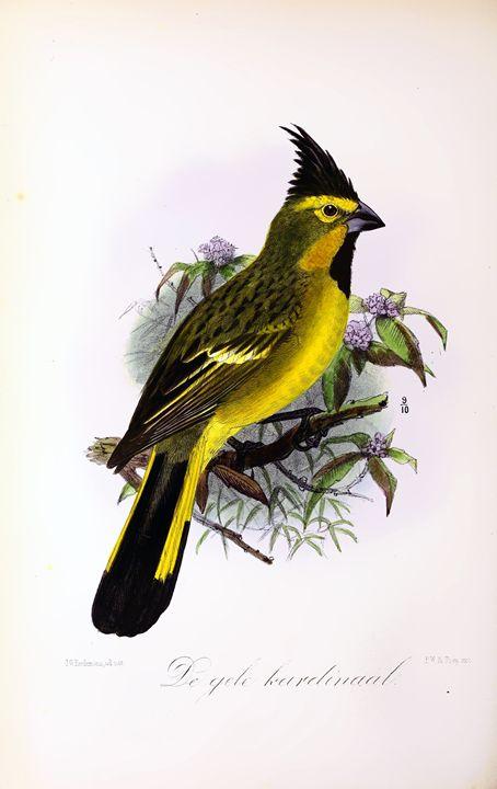 Onze vogels in huis en tuin#41 - SPCHQ