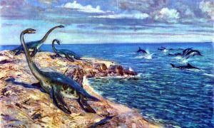 Plesiosaurus Brachypterygius - SPCHQ