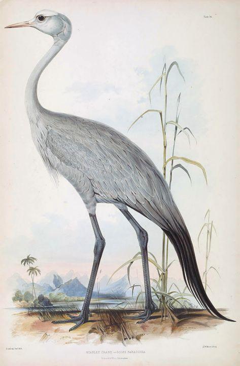 Stanley crane - SPCHQ