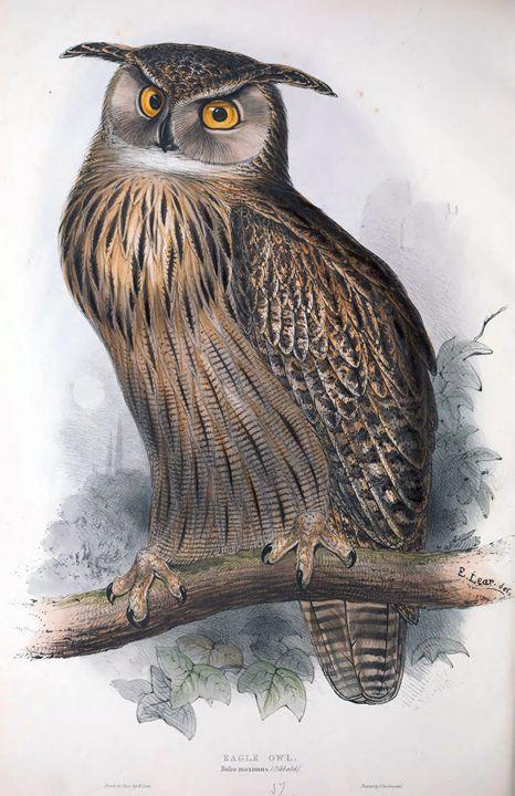 Eagle owl - SPCHQ