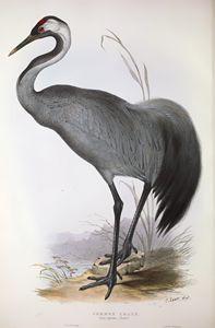 Crane - SPCHQ