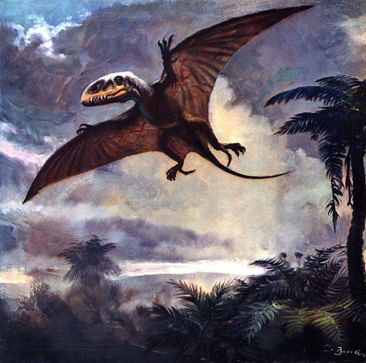 Dimorphodon - SPCHQ