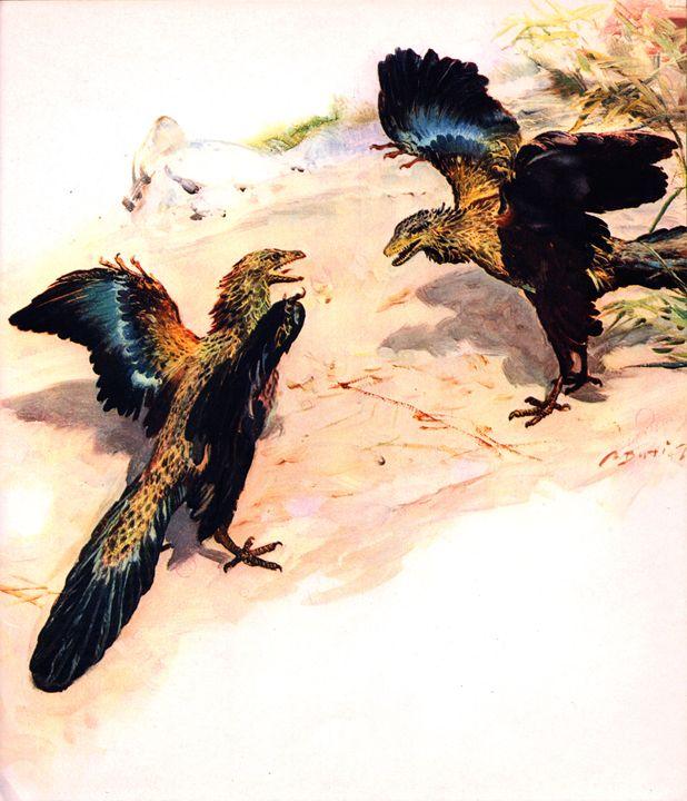 Archaeopteryx - SPCHQ
