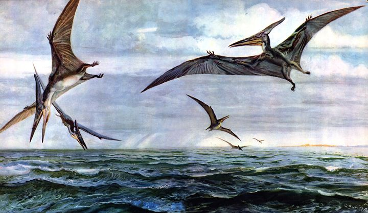 Pteranodon - SPCHQ