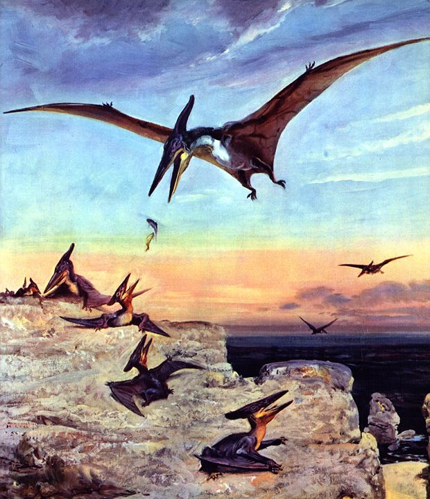 Pteranodon young - SPCHQ