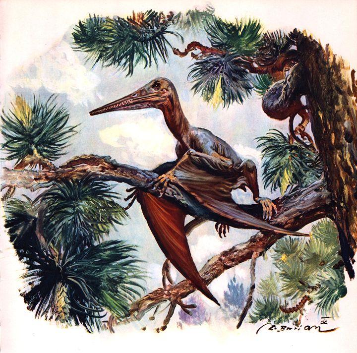 Pterodactylus Antiquus - SPCHQ