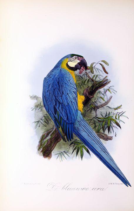 Onze vogels in huis en tuin#25 - SPCHQ