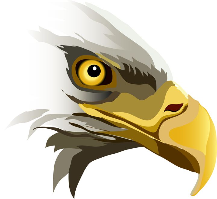 Eagle ever watching - JnJ