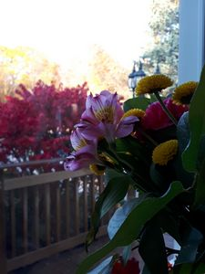 Brenda Grey Garden view