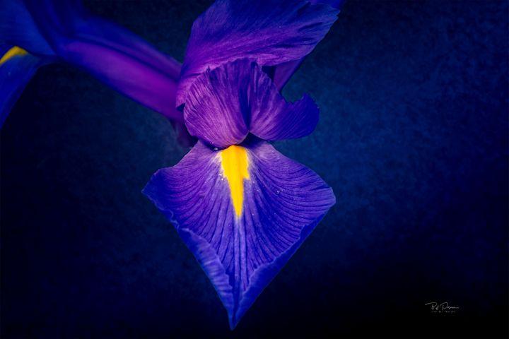 Purple Petals - bposner images