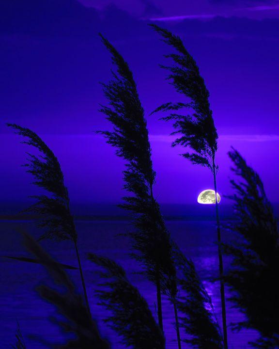 Bombay Hook Moonrise - Rrrosepix