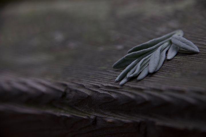 leaves on wood - Rrrosepix