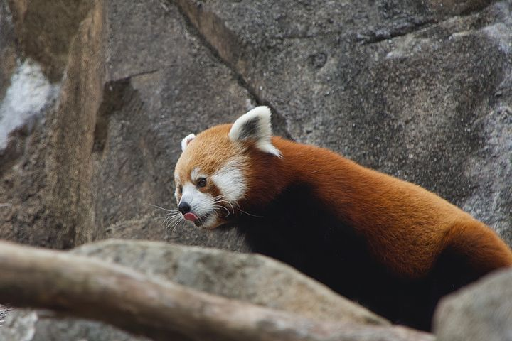 Where's my snack - Rrrosepix