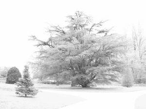 HighKey Cedar