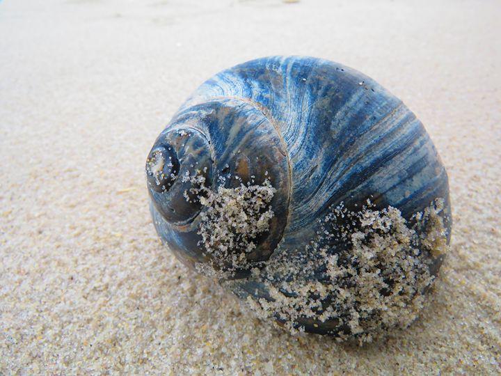 Color me Blue - Rrrosepix