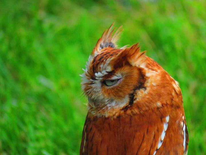 Russet owl - Rrrosepix