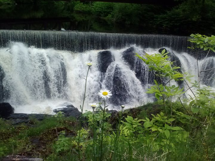 Flower in front of Waterfall - Janelle's Creations