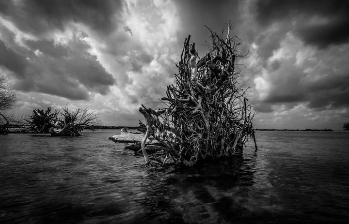Driftwood Remains B&W - Cortney Leigh