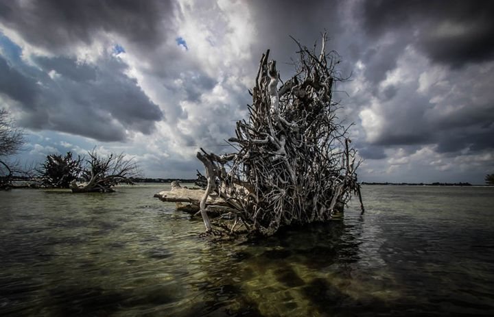 Driftwood Remains color - Cortney Leigh