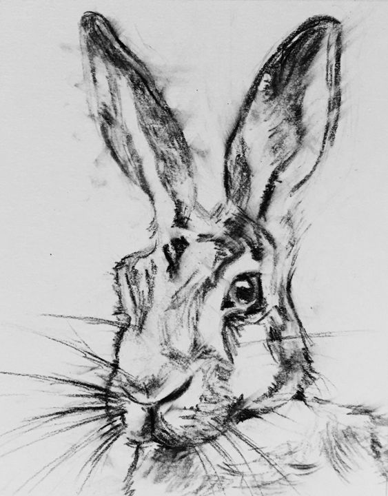Charcoal Hare - Kathryn Clifford