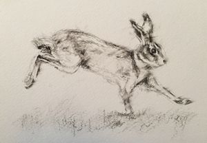 Charcoal Hare in motion