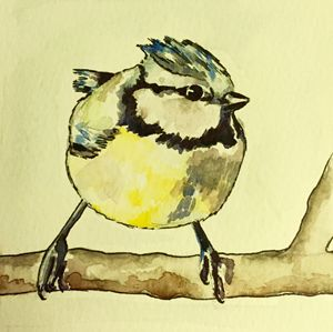 Mr Blue Tit