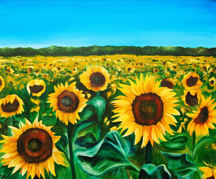 Sunflowers in France - Kathryn Clifford