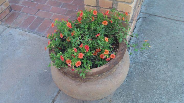 Orange Flowers - Edwardo Rodriguez Galleria