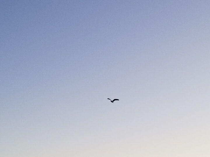 Happy Seagull - Sarah Hudson