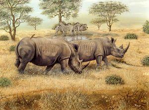 Rhinos & zebras at waterhole
