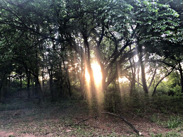 Sunset Through the Trees - Michelle Mahl