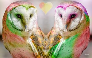 The Love Owls