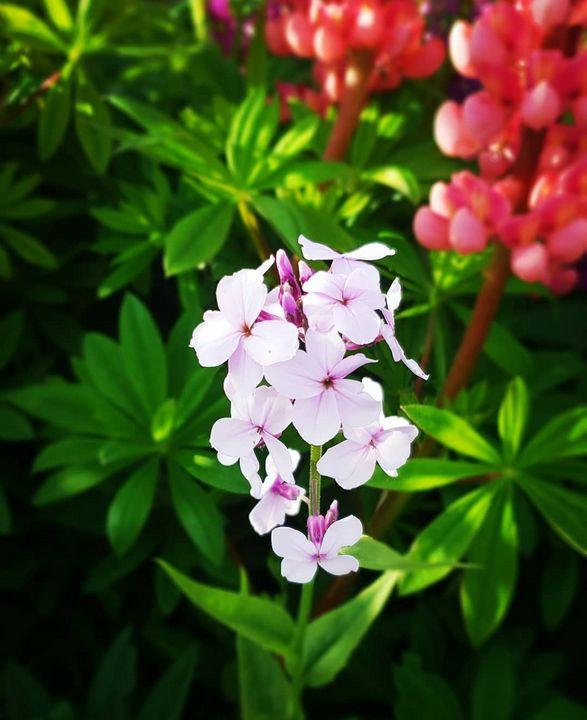 Garden 2 - MalinRobertsArt