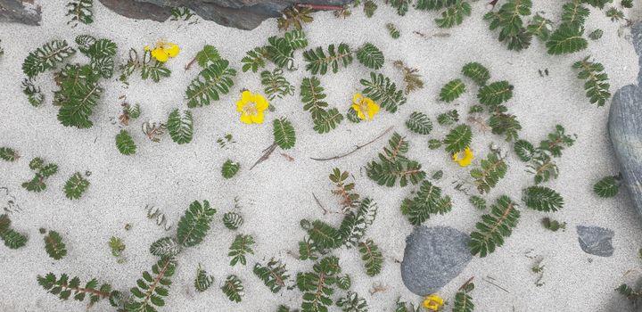 Sand flowers - MalinRobertsArt