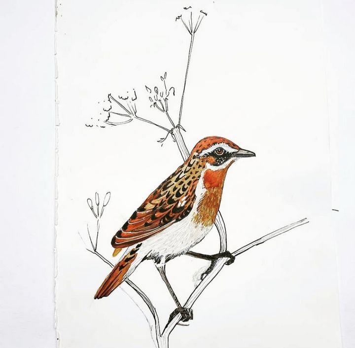 Sparrow - MalinRobertsArt