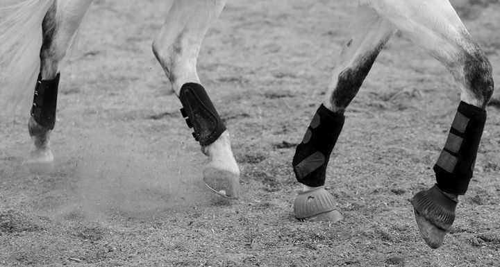 Horses in Motion I - Cantor Photography