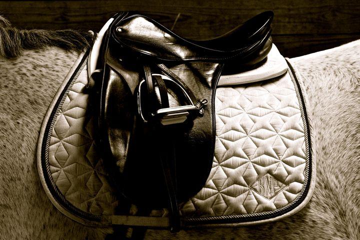 Dressage Saddle - Cantor Photography