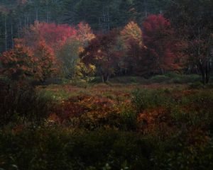 Fall Painting III - Meadow