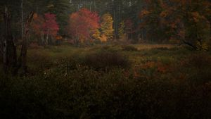 Fall Painting IV - Field