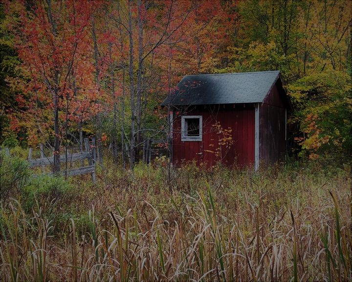Shed in the Woods - Fall - Cantor Photography