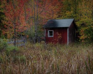 Shed in the Woods - Fall