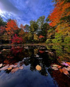 Autumn on the Pond - Cantor Photography
