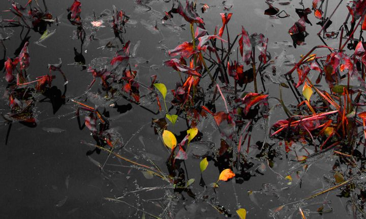 Spots of Color I - Cantor Photography
